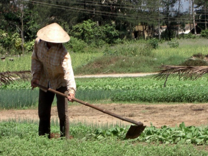 1200px-Peasant_in_the_vegetable_garden.JPG