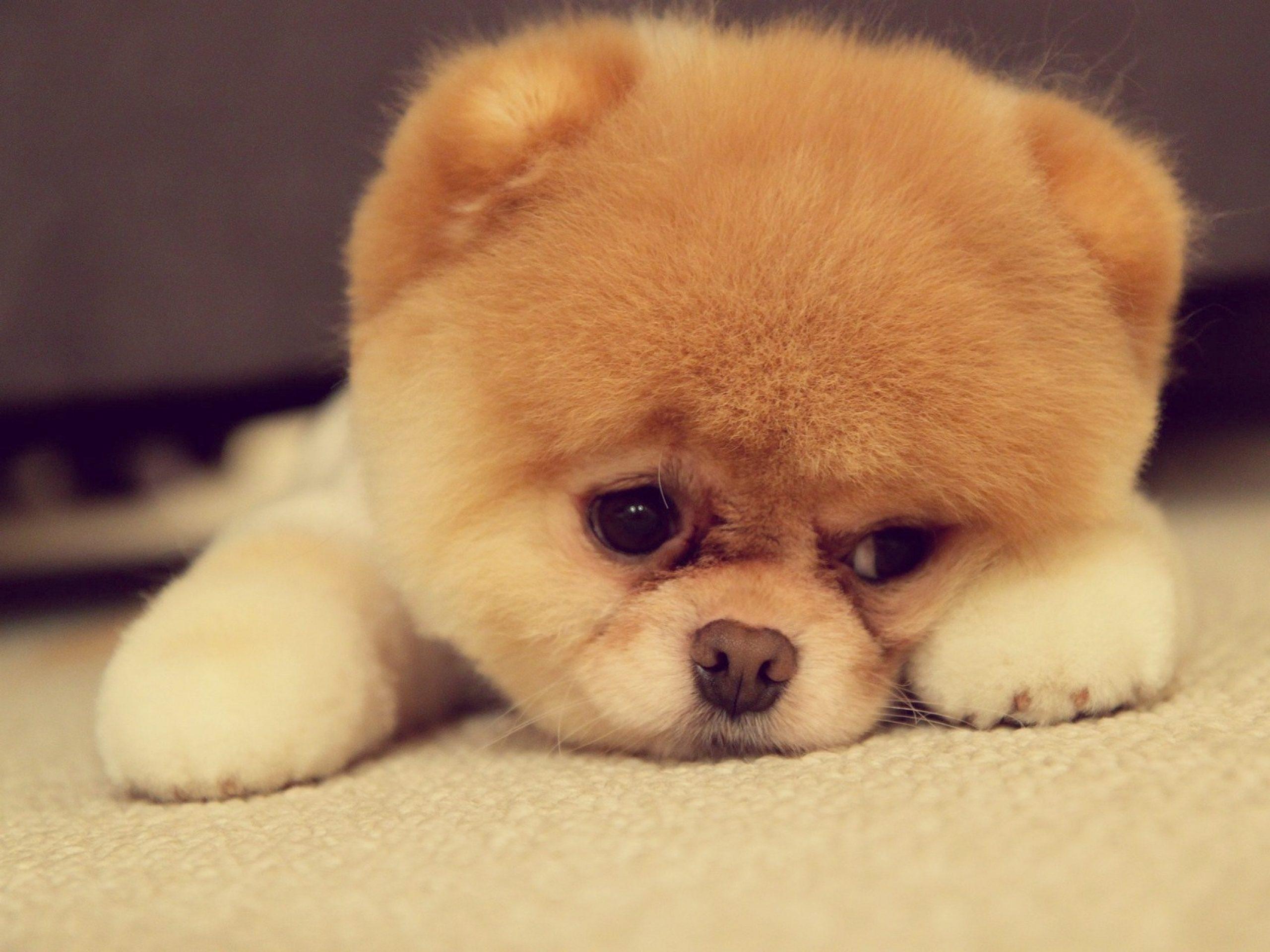 6945118-sad-puppy-face (1).jpg