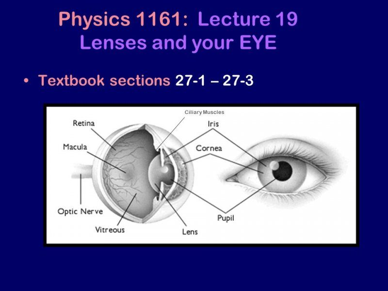 Physics+1161_+Lecture+19+Lenses+and+your+EYE.jpg