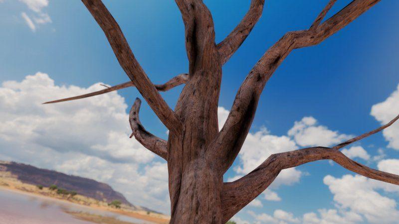 Scenery Tree detail FH3.jpg